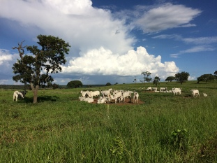Fazenda Mundo Novo (Uberaba, MG). Arquivo pessoal.